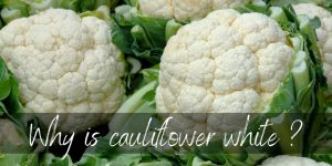 Why Is Cauliflower White ? The Surprising Truth Behind Its Color