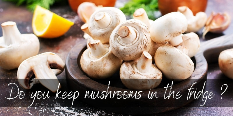 Read more about the article Should You Refrigerate Mushrooms ? Yes, And Here's How To Store Them