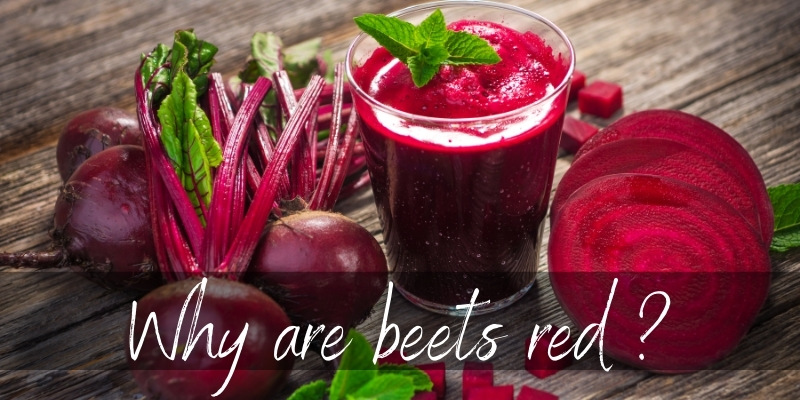 Read more about the article What Makes Beets Red ? Here's What's In Them