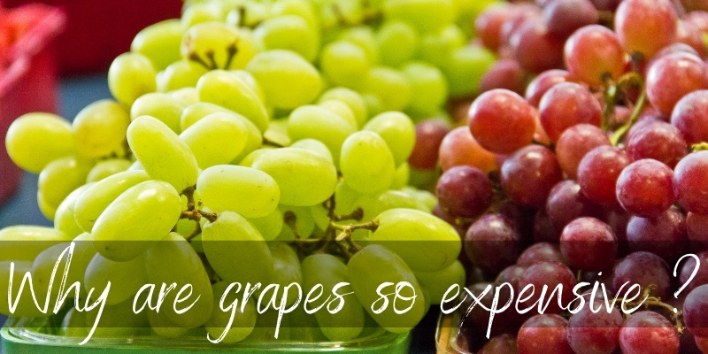 Why Are Grapes So Expensive ? 5 Reasons You're Paying More