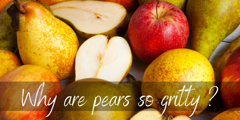 Why Are Pears Gritty ? Here's What's Going On