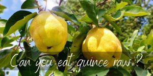 Read more about the article Can You Eat Quince Raw ? Here's How To Eat This Thing