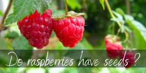Read more about the article Do Raspberries Have Seeds ? Here's What To Know